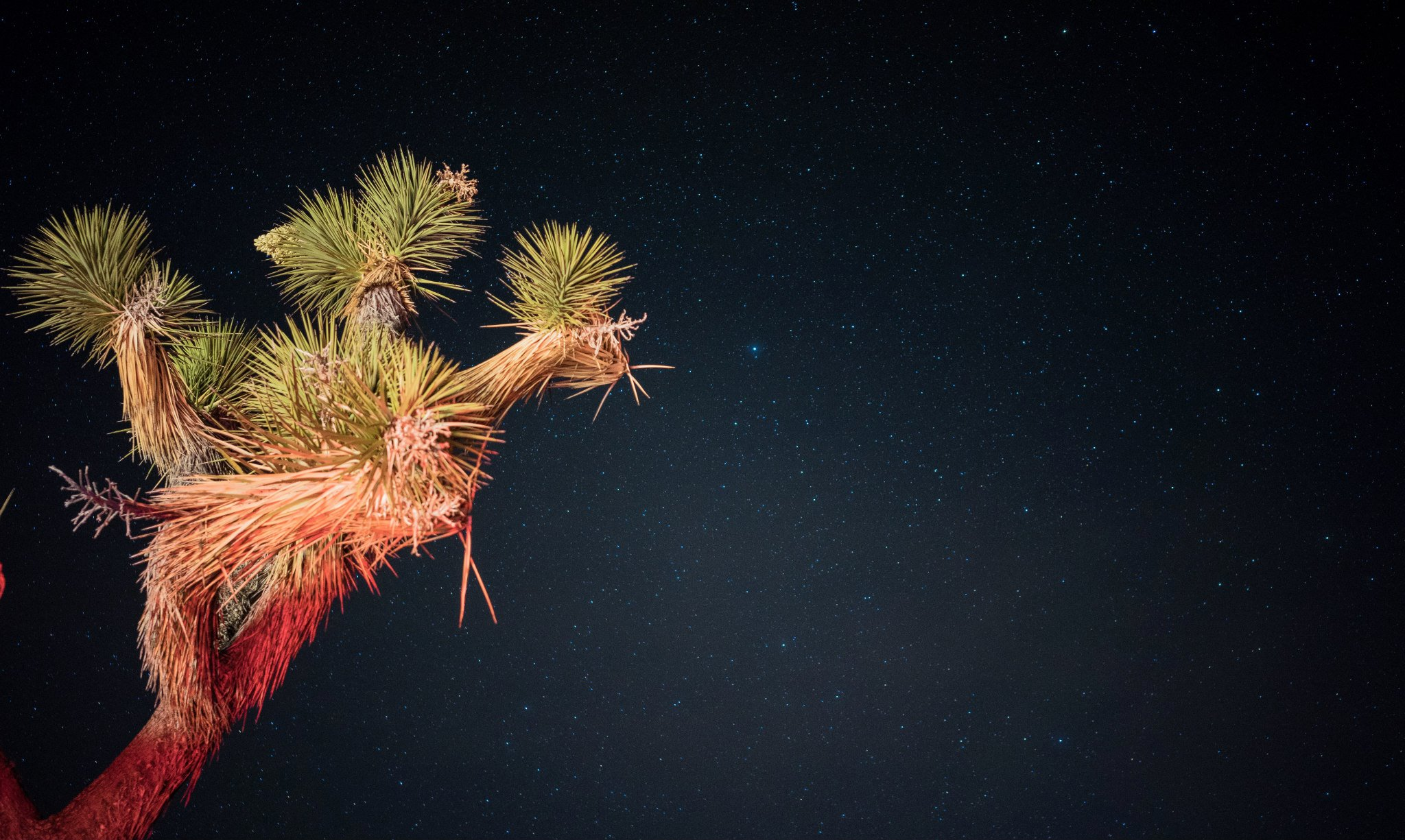 Joshua Tree with Stars